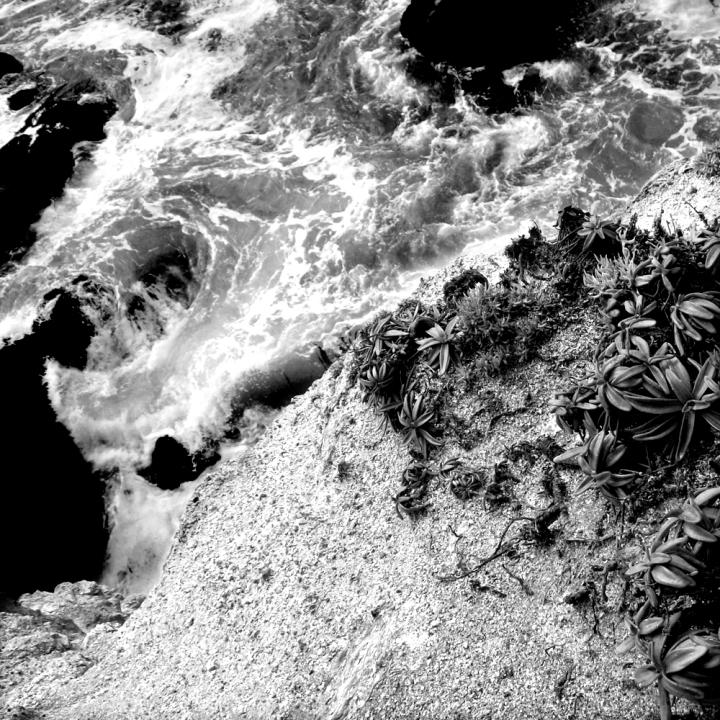 foamswirl_plants_gray_contrast2